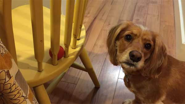 "<div class=""meta image-caption""><div class=""origin-logo origin-image ""><span></span></div><span class=""caption-text"">This poor dog tries everything except the obvious way. (Photo/YouTube, Grizzly Black)</span></div>"