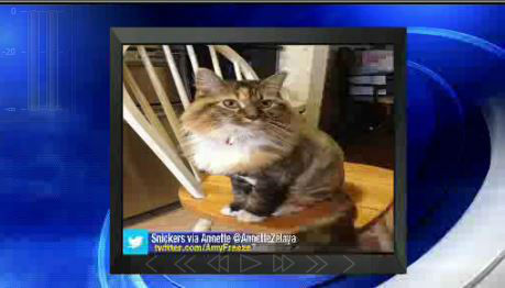"""<div class=""""meta image-caption""""><div class=""""origin-logo origin-image none""""><span>none</span></div><span class=""""caption-text"""">Send us your photos using Twitter and Instagram using the hashtags #SuperCatSaturday or #BigDogSunday, or send photos to Amy via Twitter @AmyFreeze7 (WABC)</span></div>"""