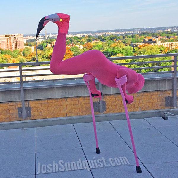 <div class='meta'><div class='origin-logo' data-origin='none'></div><span class='caption-text' data-credit='Josh Sundquist'>In 2013, Josh Sundquist dressed as a flamingo.</span></div>
