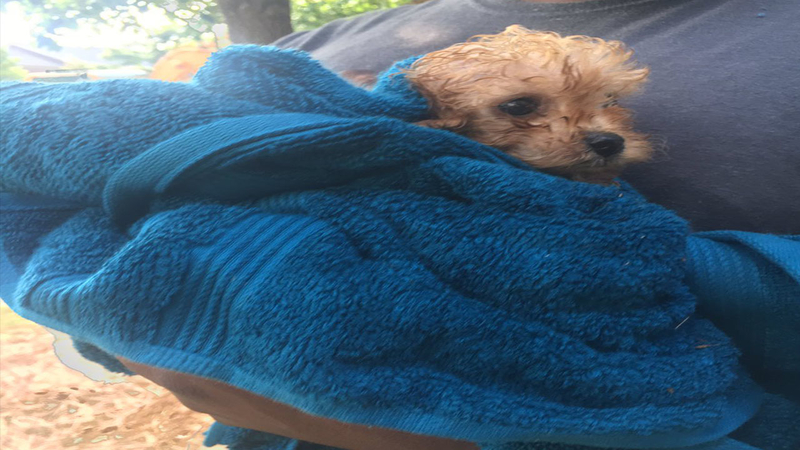 Crews rescue puppy from Charlotte drain