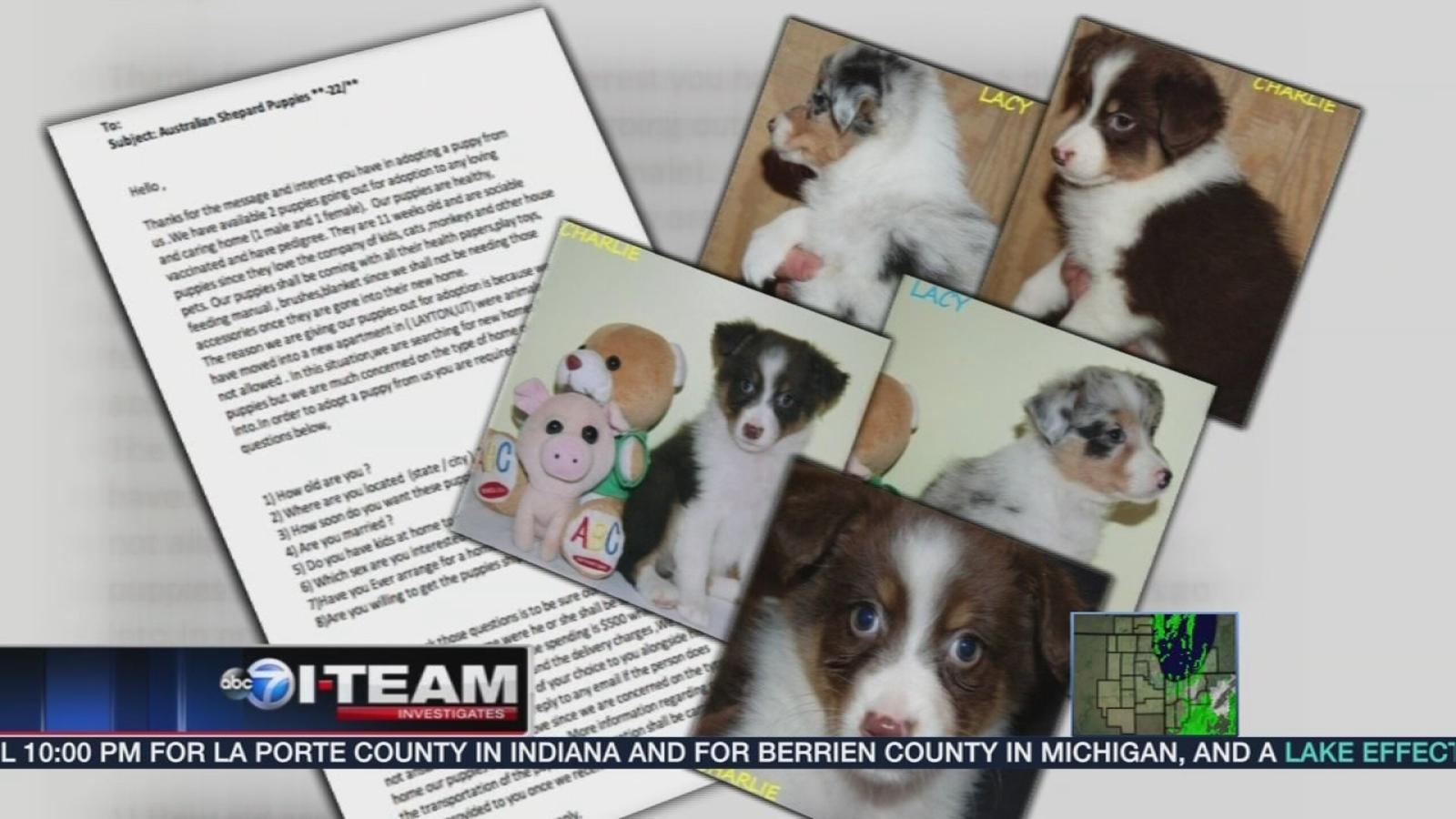 Puppy Scammer List 2020.103114 Wls Iteam Puppyscam Vid