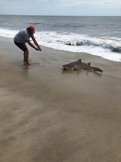 "<div class=""meta image-caption""><div class=""origin-logo origin-image wabc""><span>WABC</span></div><span class=""caption-text"">Photos of sharks captured off Fire Island on Thursday, July 19, 2018, one day after 2 children were bitten.(Courtesy: Angelo DiGrigoli)</span></div>"