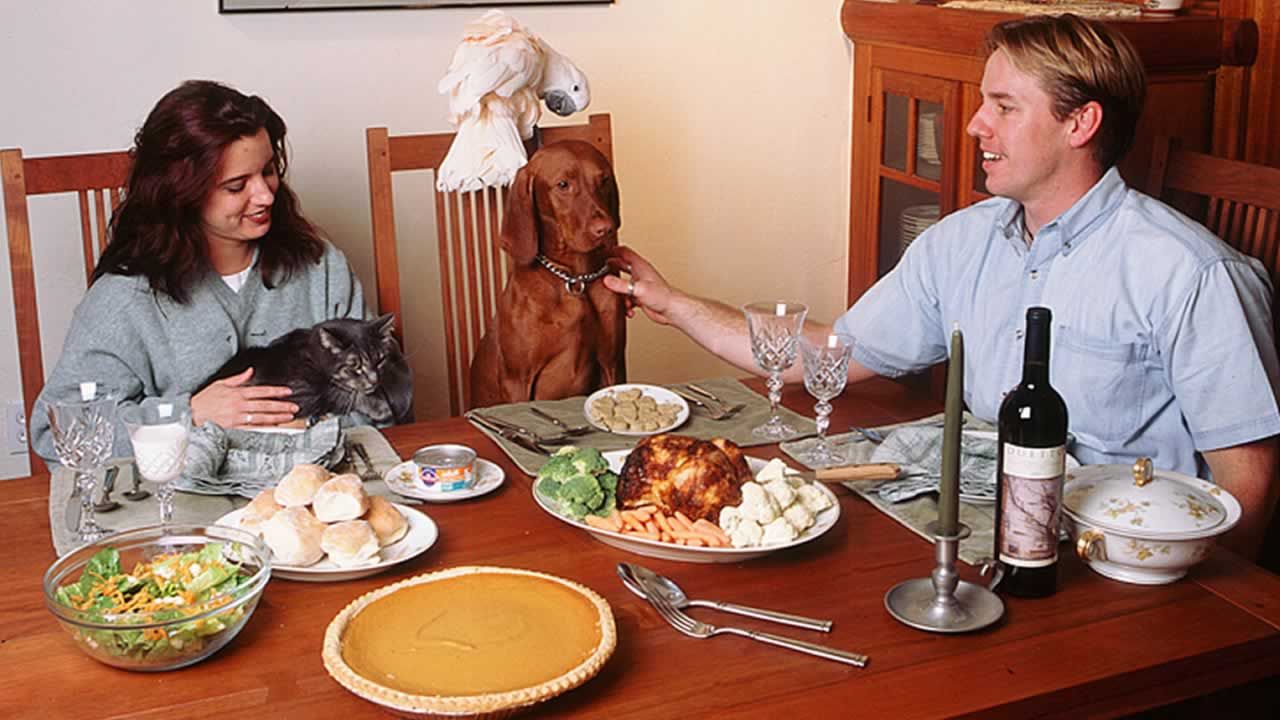 Pets at Thanksgiving dinner