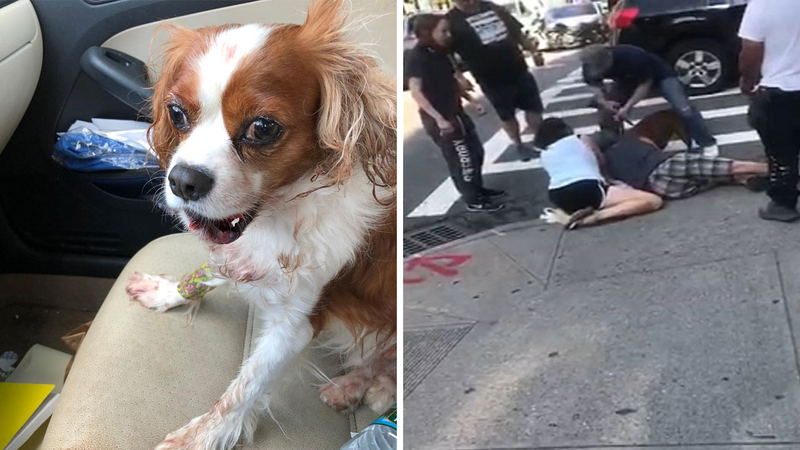 Unleashed pit bull viciously attacks small dog in Washington Heights