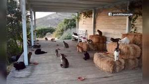 Pet Rescue Abc13 Com