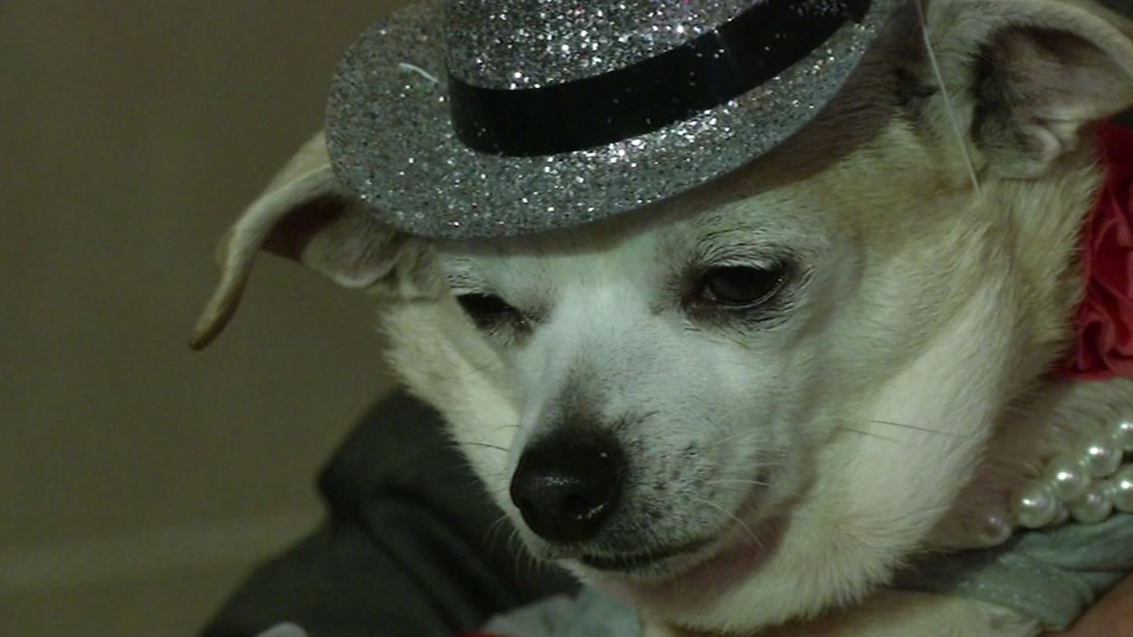 "A small Chihuahua named Frida was declared ""Mayor of San Francisco"" for the day after her owner won a donation bid benefiting a local animal shelter."