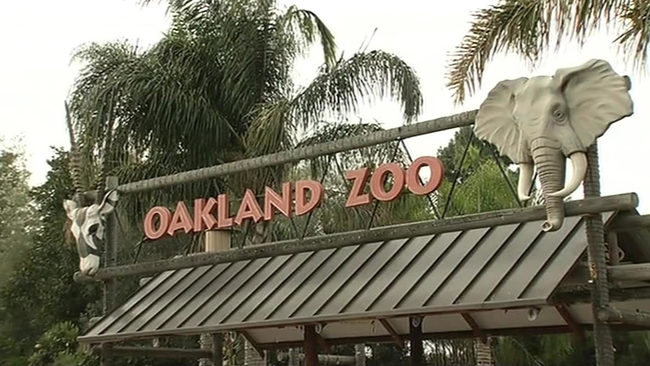 oakland zoos newest addition - 650×366
