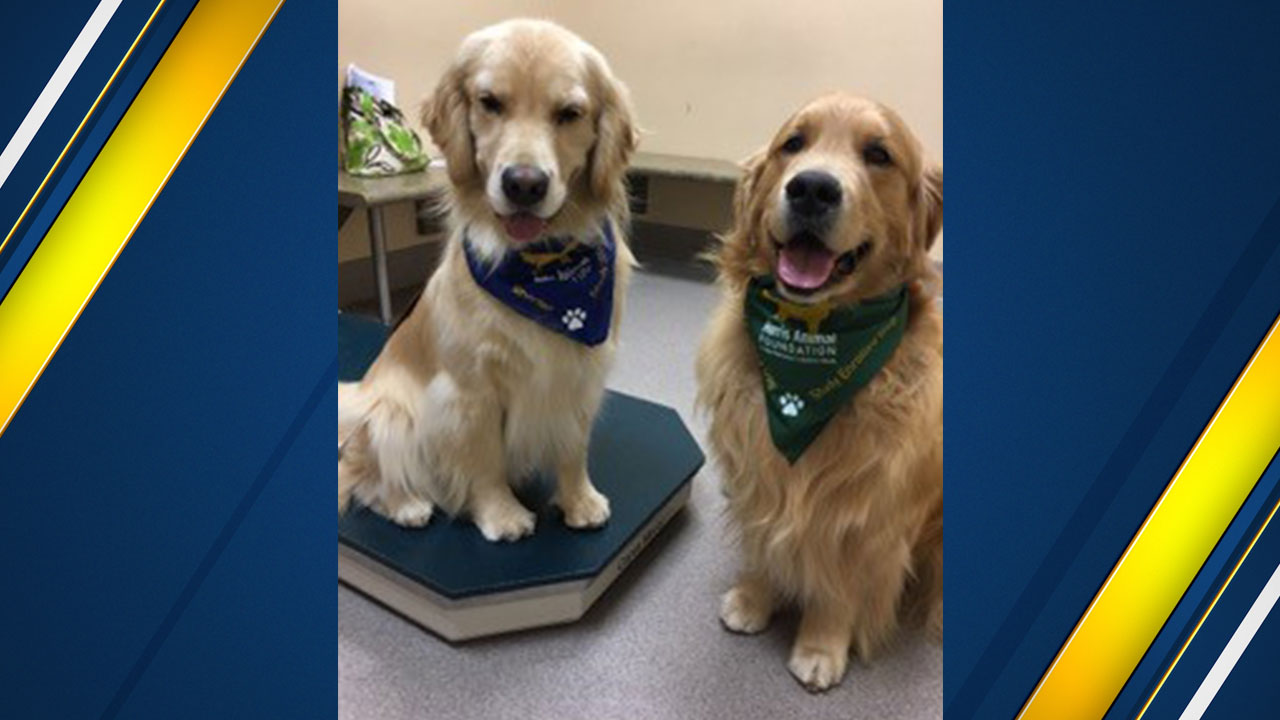 <div class='meta'><div class='origin-logo' data-origin='none'></div><span class='caption-text' data-credit='Pam Kennedy'>&#34;Yankee&#34; (left) weighing in at his 5th-year annual exam. &#34;Friday&#34; (right) a three-year-old Golden stands by for support.</span></div>