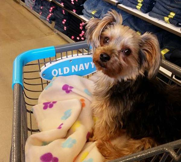 PHOTOS: Local pets at pet-friendly stores | 6abc com