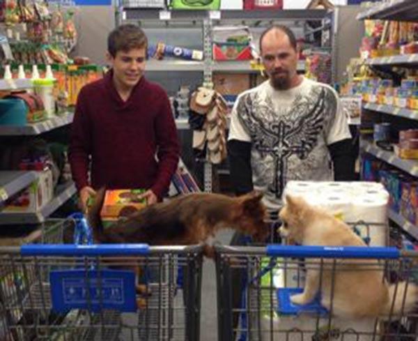 PHOTOS: Local pets at pet-friendly stores   6abc com