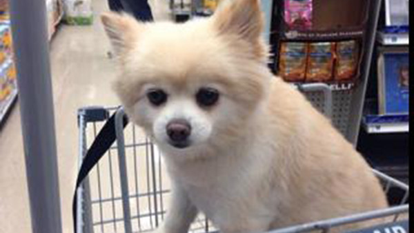 Pets mostly welcome in stores, but follow the rules | 6abc com