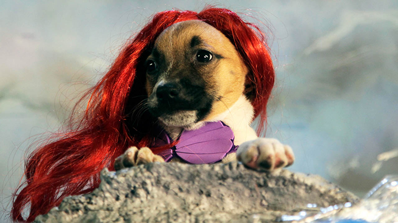 puppies dressed as famous disney characters