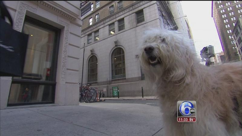 VIDEO: Pet friendliest places