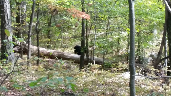 "<div class=""meta image-caption""><div class=""origin-logo origin-image ""><span></span></div><span class=""caption-text"">Photos of the bear that killed a hiker in Apshawa Preserve in West Milford, New Jersey in September.   Darsh Patel, the hiker who was killed, took 5 of the photos.</span></div>"