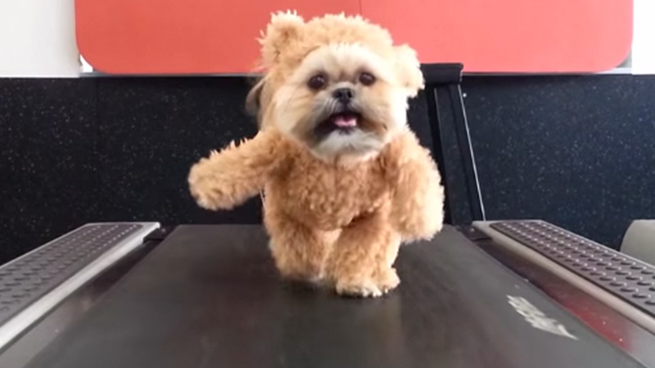 Munchkin Quot The Teddy Bear Dog Quot Releases All New Exercise