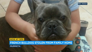Dogs stolen | abc7 com