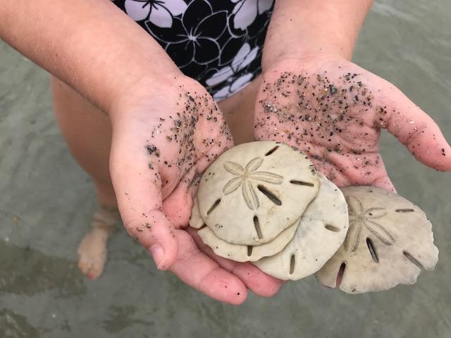 <div class='meta'><div class='origin-logo' data-origin='WTVD'></div><span class='caption-text' data-credit=''>Sand Dollar Island is a fun place for a family adventure off the North Carolina coast.</span></div>