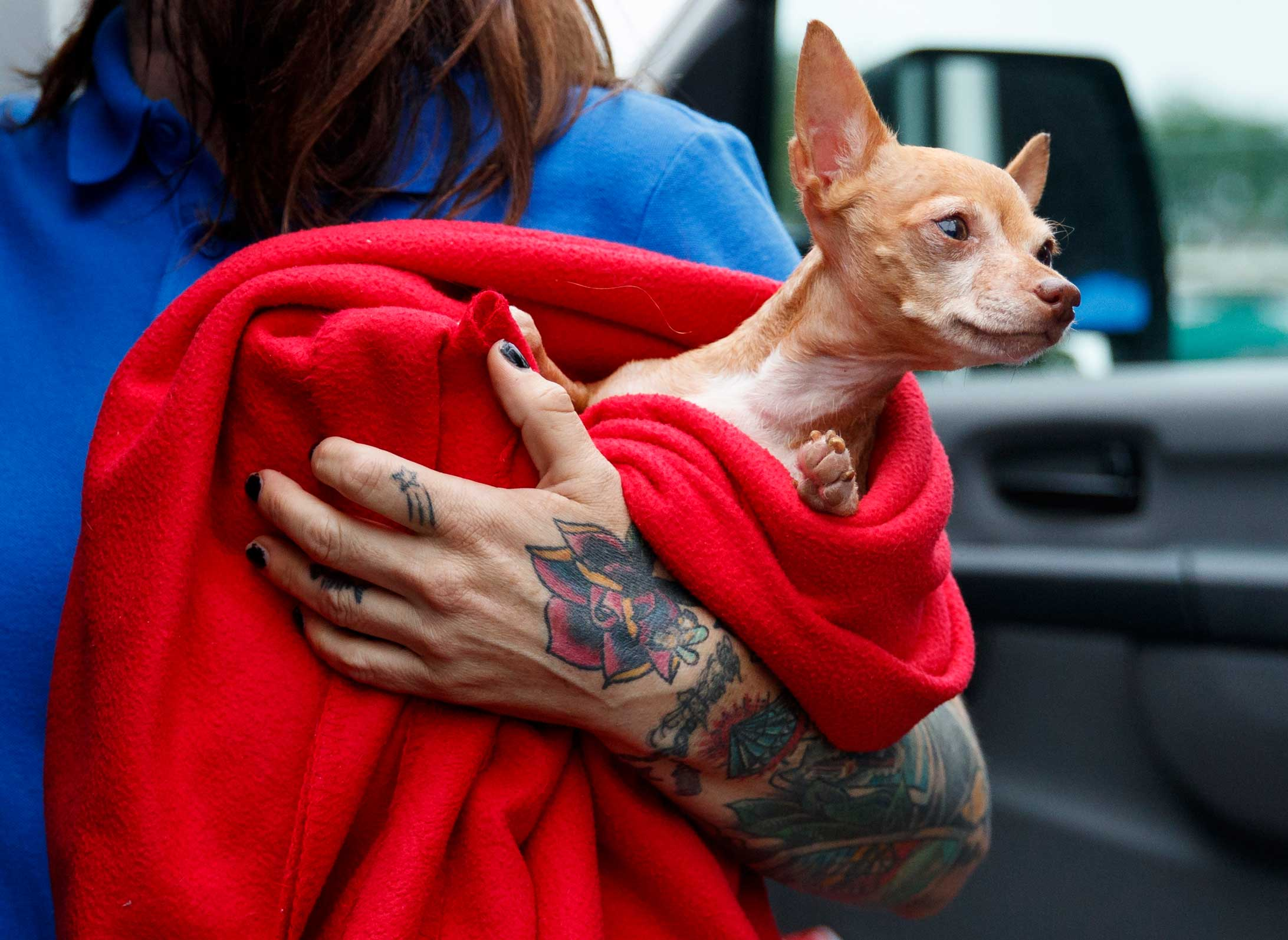 <div class='meta'><div class='origin-logo' data-origin='none'></div><span class='caption-text' data-credit='Carolyn Kaster/AP Photo'>Frances, an 8-year-old Chihuahua mix up for adoption, is one of the 26 cats and dogs arriving at Humane Rescue Alliance in Washington ahead of Florence.</span></div>