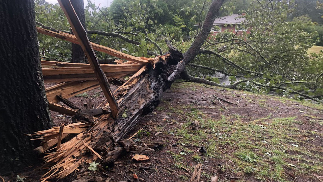 "<div class=""meta image-caption""><div class=""origin-logo origin-image wtvd""><span>WTVD</span></div><span class=""caption-text"">A damaged tree in Manteo, North Carolina, during Hurricane Florence. (Morgan Norwood)</span></div>"