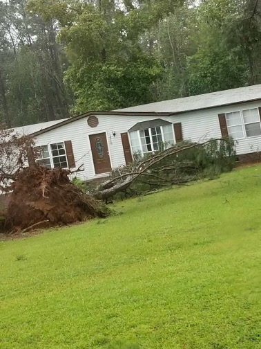 "<div class=""meta image-caption""><div class=""origin-logo origin-image wtvd""><span>WTVD</span></div><span class=""caption-text"">Trees down in the Smithfield/Clayton area from Hurricane Florence. (Courtesy of Peter Duca)</span></div>"