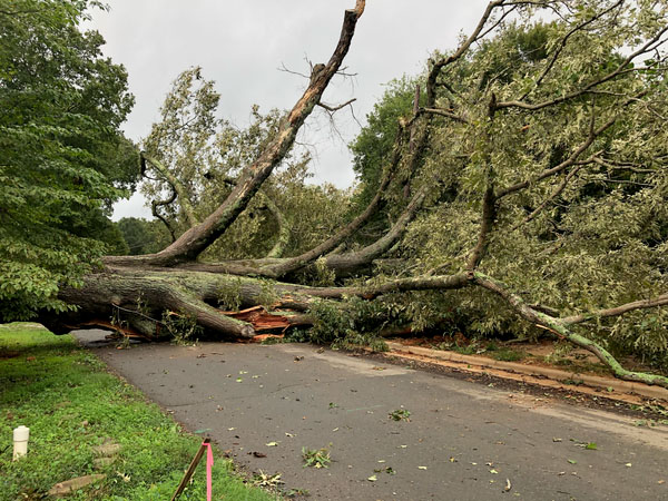 <div class='meta'><div class='origin-logo' data-origin='WTVD'></div><span class='caption-text' data-credit='Town of Hillsborough'>A huge red oak tree came crashing down Friday on Calvin Street in Hillsborough, causing a power outage.</span></div>