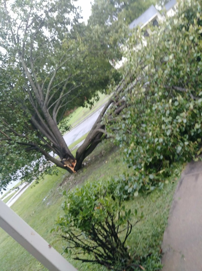 <div class='meta'><div class='origin-logo' data-origin='WTVD'></div><span class='caption-text' data-credit='Courtesy of Domika Stewart'>A tree is down in Goldsboro.</span></div>