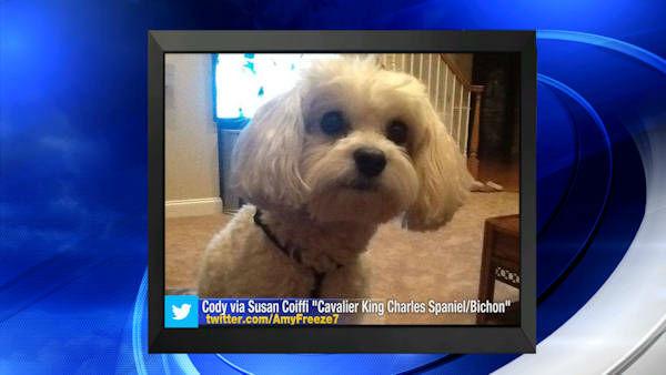 """<div class=""""meta image-caption""""><div class=""""origin-logo origin-image none""""><span>none</span></div><span class=""""caption-text"""">Big Dog Sunday - Dec. 7, 2014</span></div>"""
