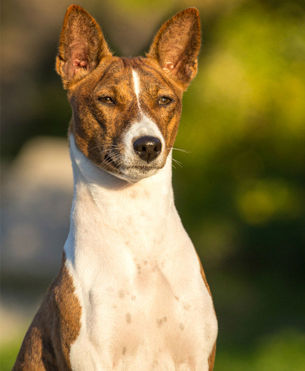 2014 Most Popular Male Dog Names