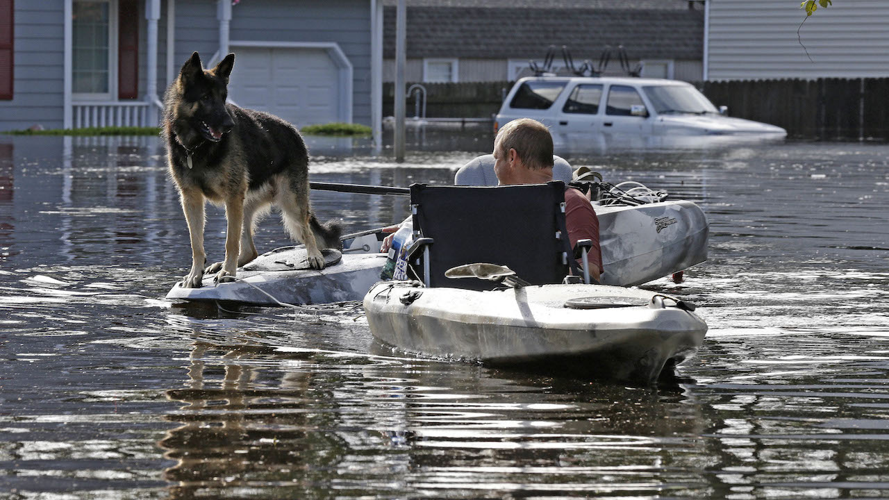 <div class='meta'><div class='origin-logo' data-origin='AP'></div><span class='caption-text' data-credit='AP Photo/Gerry Broome'>A man tries to get his dog out of a flooded neighborhood in Lumberton, N.C., Monday, Sept. 17, 2018, in the aftermath of Hurricane Florence.</span></div>