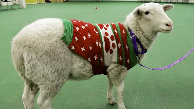 Image result for christmas sheep