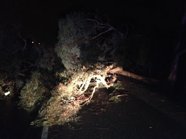 "<div class=""meta image-caption""><div class=""origin-logo origin-image ""><span></span></div><span class=""caption-text"">A downed tree blocking three lanes of I-80 in Pinole on Thursday. Dec. 11, 2014 (ABC7 News)</span></div>"