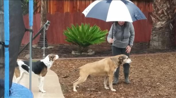 "<div class=""meta image-caption""><div class=""origin-logo origin-image ""><span></span></div><span class=""caption-text"">The Gonzalez family likes to protect their pets from the rain! (Photo submitted via uReport) (uReport)</span></div>"
