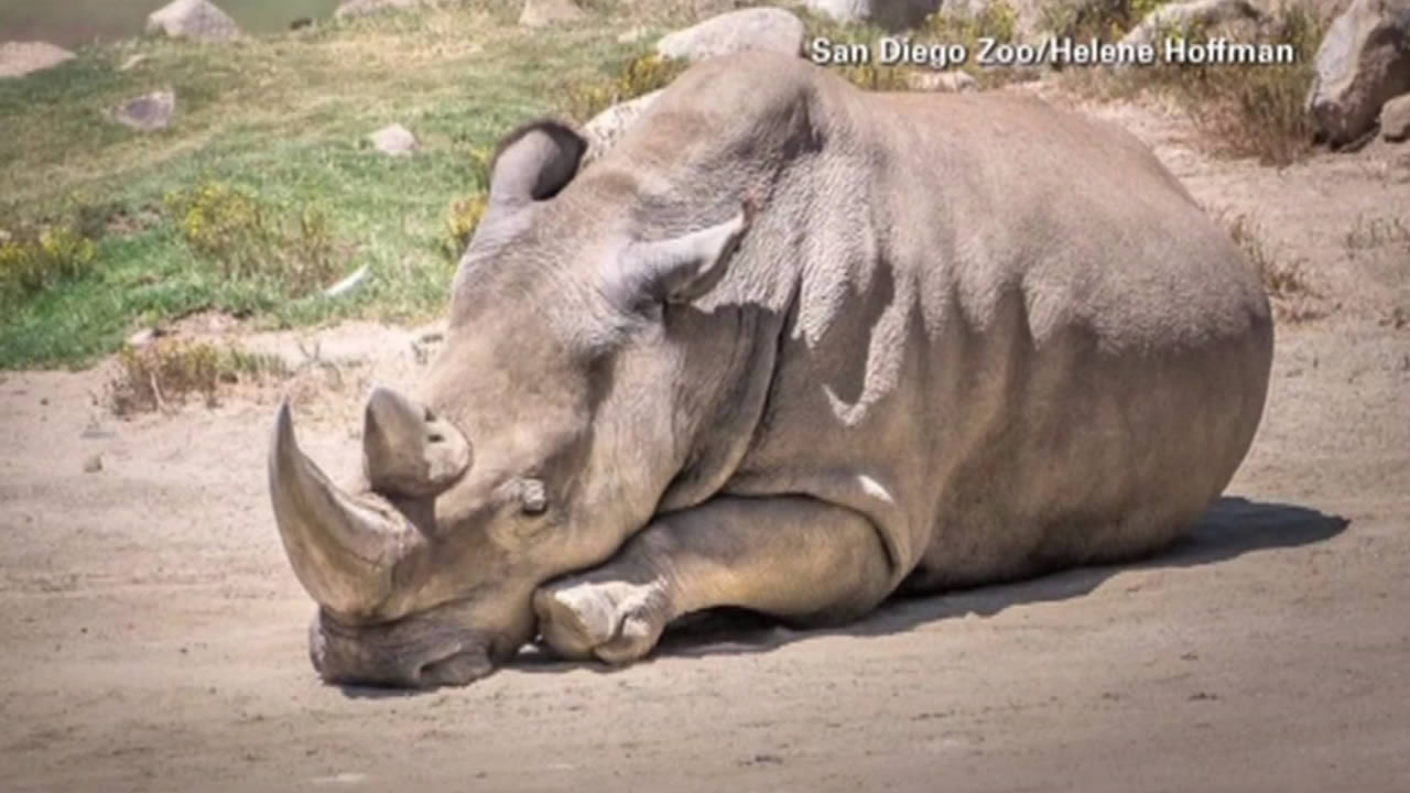 Officials at the San Diego Zoo Safari Park have announced the death of a rare white rhinoceros named Angalifu.