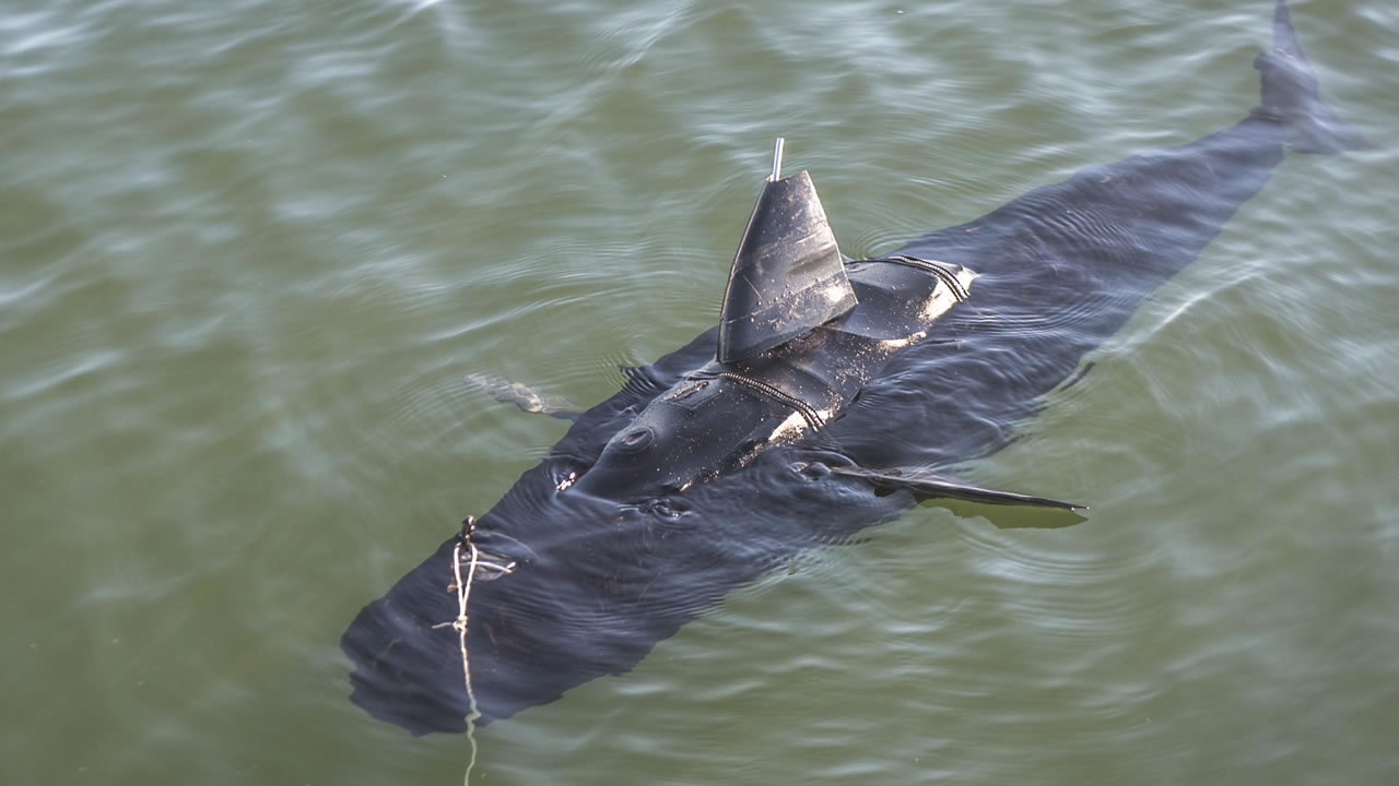 The U.S. Navy has unveiled a drone shark called the GhostSwimmer.