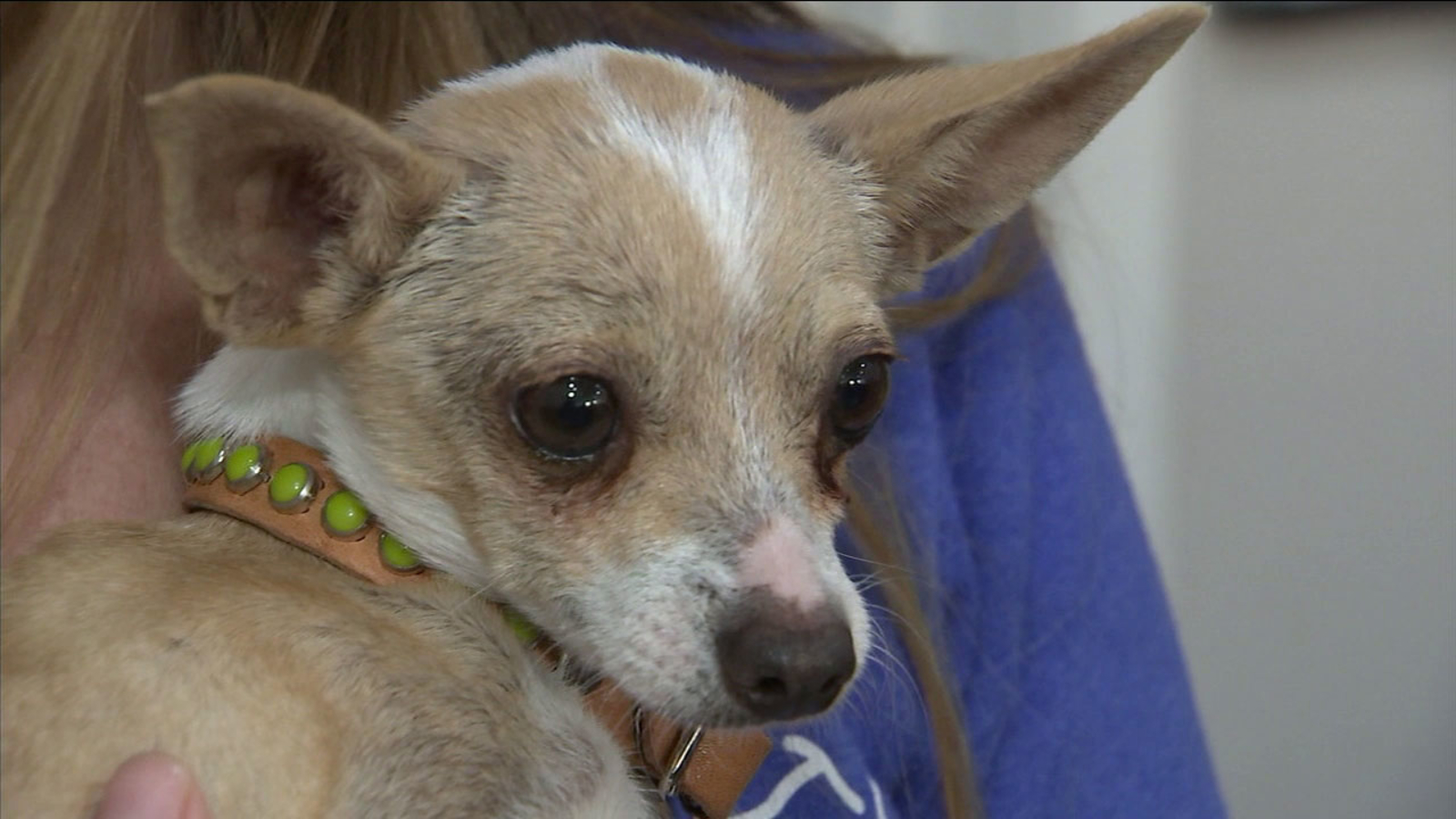 Sherman Oaks group rescues dogs allegedly abused by owner