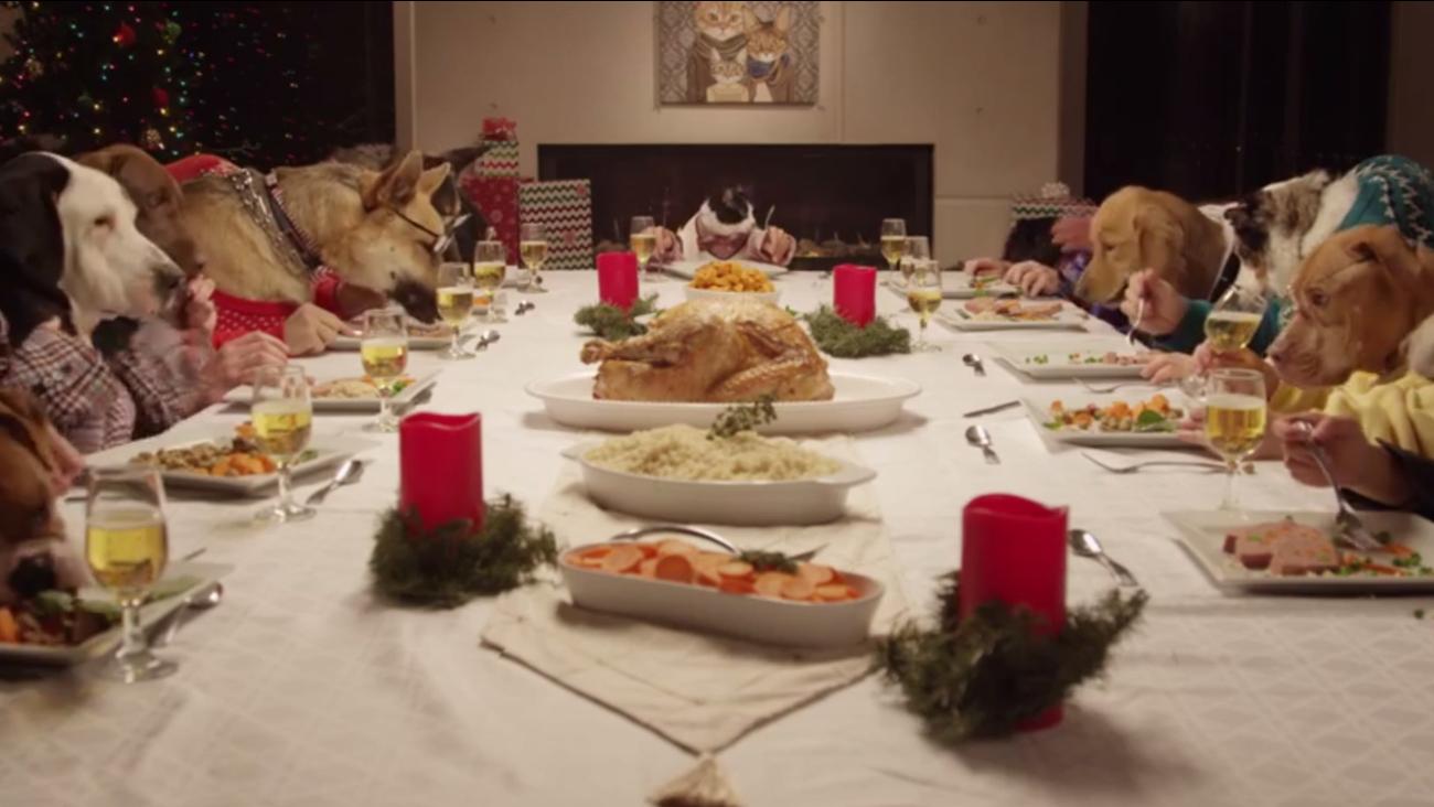 Animals eating festive dinner