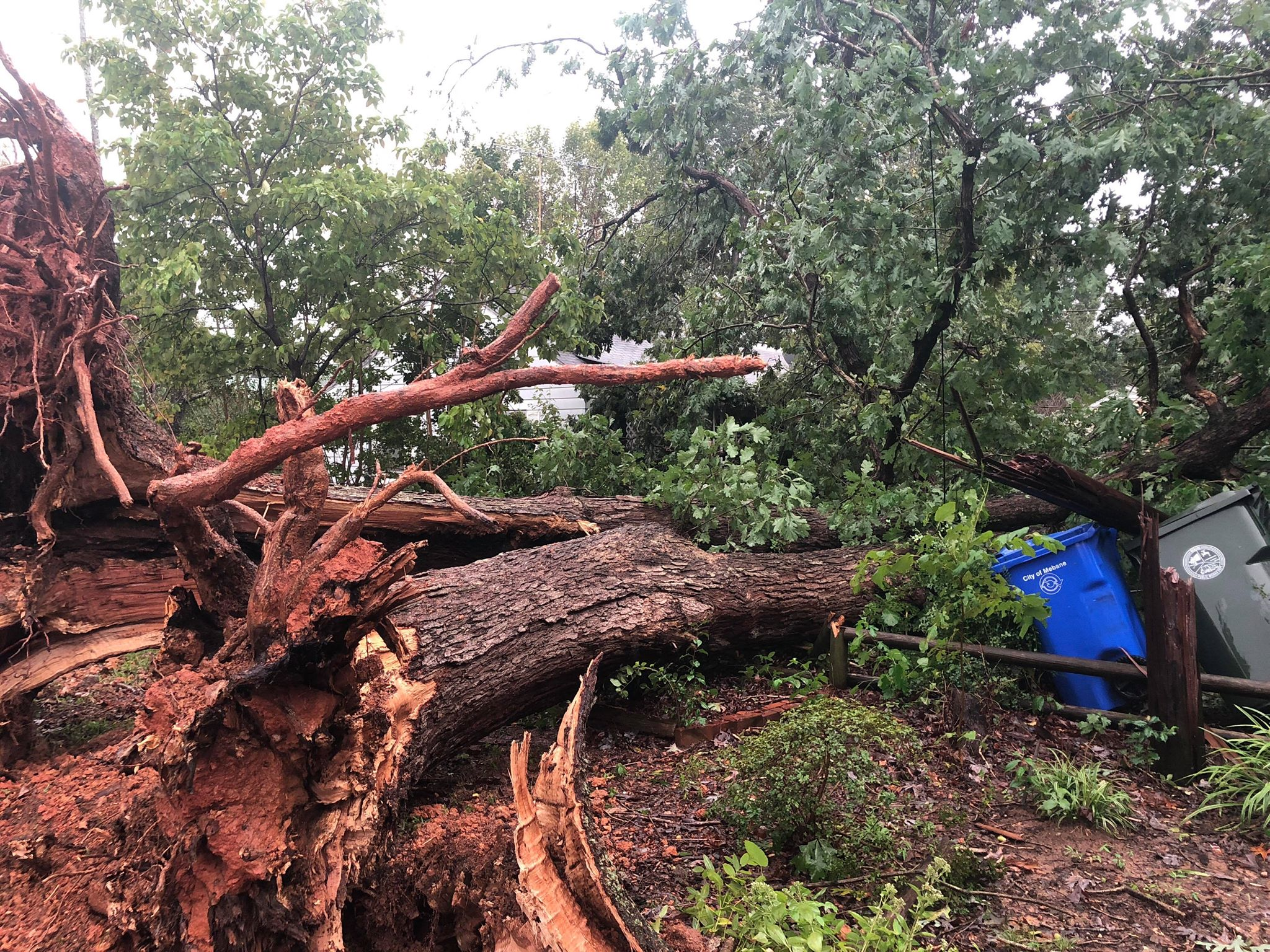 """<div class=""""meta image-caption""""><div class=""""origin-logo origin-image wtvd""""><span>WTVD</span></div><span class=""""caption-text"""">A large tree is down in Mebane. (ABC11 Eyewitness)</span></div>"""