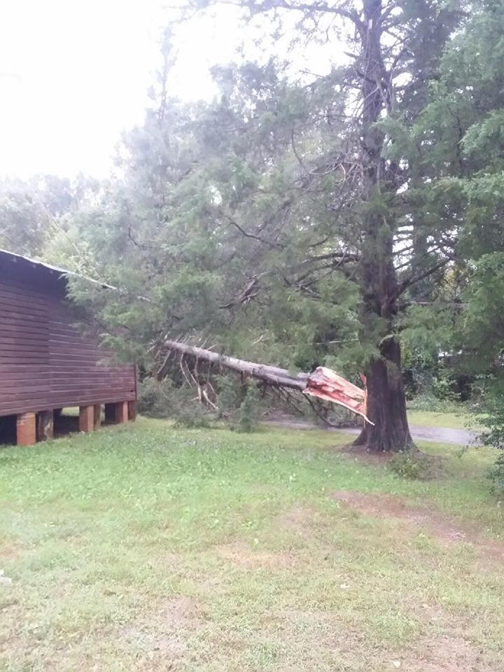 """<div class=""""meta image-caption""""><div class=""""origin-logo origin-image wtvd""""><span>WTVD</span></div><span class=""""caption-text"""">Trees came crashing down in Saxapahaw in southern Alamance County on Thursday. (Courtesy of Nicky Carter)</span></div>"""