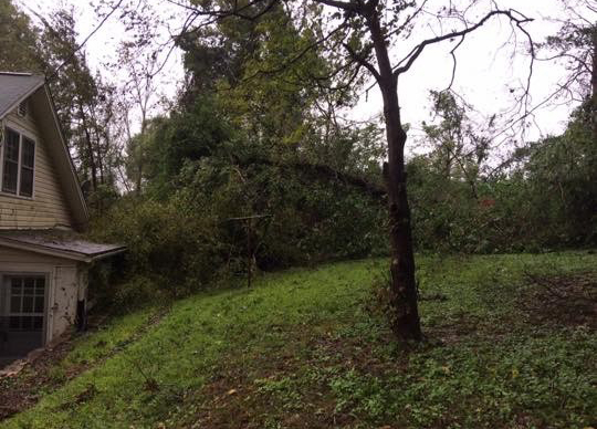 <div class='meta'><div class='origin-logo' data-origin='WTVD'></div><span class='caption-text' data-credit='Courtesy of Nicky Carter'>Trees came crashing down in Saxapahaw in southern Alamance County on Thursday.</span></div>