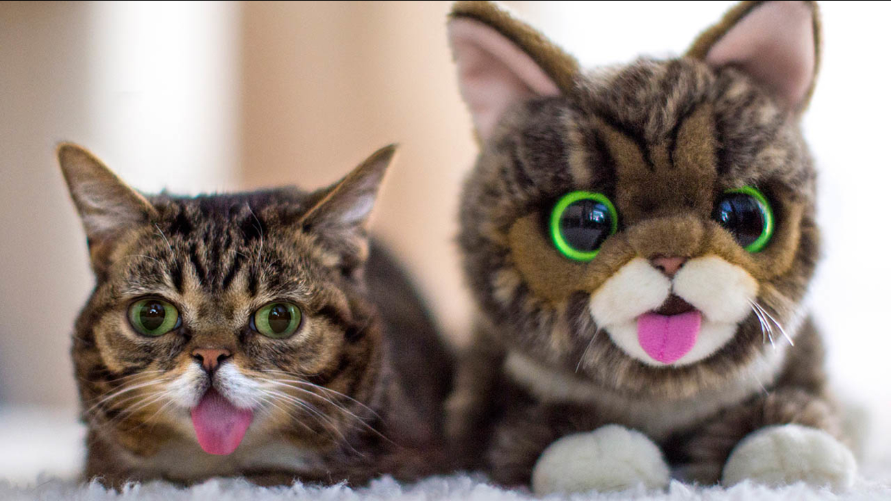 lil bub - photo #16