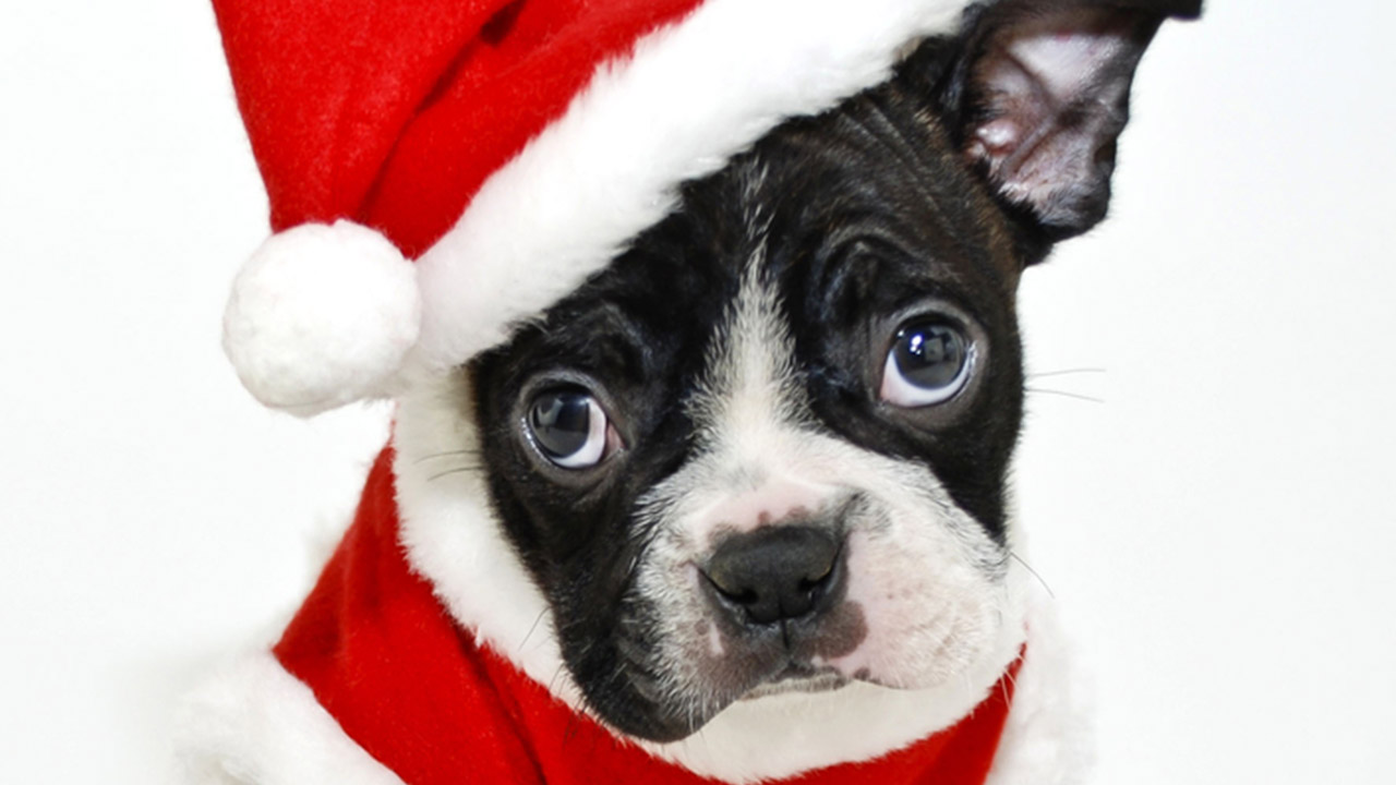 CUTE ANIMALS: This Santa dog's present to you is a clean ...