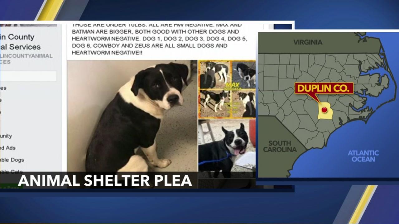 Pet friends of duplin county