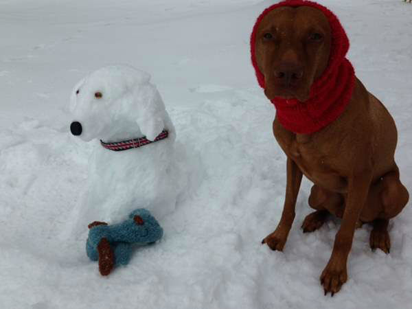 "<div class=""meta image-caption""><div class=""origin-logo origin-image ""><span></span></div><span class=""caption-text"">""I had to pay my dog with treats to pose while I created our 'snowdog.'"" (iWitness Photo)</span></div>"