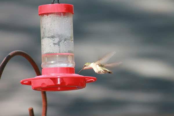 "<div class=""meta image-caption""><div class=""origin-logo origin-image ""><span></span></div><span class=""caption-text"">Female hummingbird at the feeder. (iWitness Photo)</span></div>"