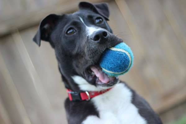 "<div class=""meta image-caption""><div class=""origin-logo origin-image ""><span></span></div><span class=""caption-text"">""Playing fetch with the new puppy."" (iWitness Photo/Brandon McCammitt)</span></div>"