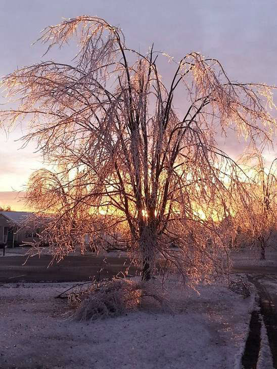 "<div class=""meta image-caption""><div class=""origin-logo origin-image ""><span></span></div><span class=""caption-text"">Tree covered in ice in Efland. (iWitness Photo)</span></div>"