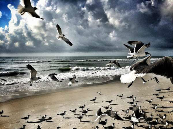 "<div class=""meta image-caption""><div class=""origin-logo origin-image ""><span></span></div><span class=""caption-text"">Seagull invasion on Carolina Beach (iWitness Photo/Kevin Maxwell)</span></div>"