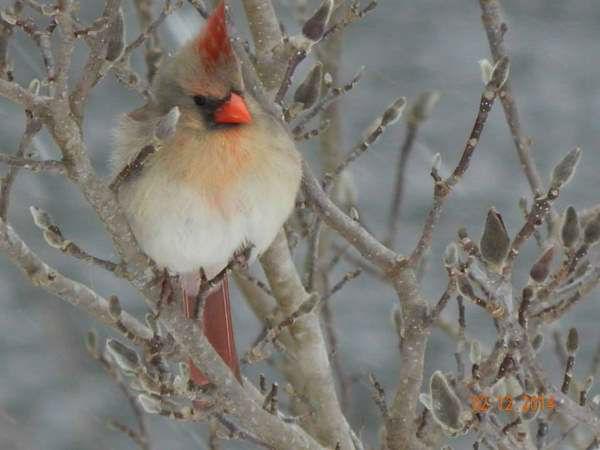 "<div class=""meta image-caption""><div class=""origin-logo origin-image ""><span></span></div><span class=""caption-text"">Beautiful bird seen during Winter 2014. (iWitness Photo)</span></div>"