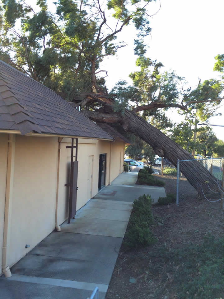 "<div class=""meta image-caption""><div class=""origin-logo origin-image ""><span></span></div><span class=""caption-text"">A tree that fell onto a house is seen in Vallejo, Calif. on Wednesday, Dec. 31, 2014. (Image sent via uReport by Mikaela)</span></div>"