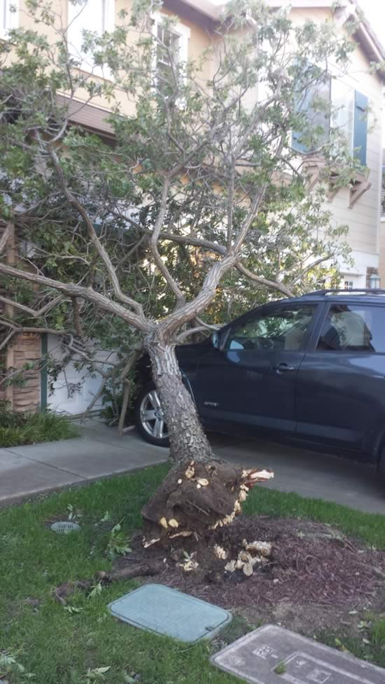 "<div class=""meta image-caption""><div class=""origin-logo origin-image ""><span></span></div><span class=""caption-text"">A tree that fell onto a car and house is seen in Castro Valley, Calif. on Wednesday, Dec. 31, 2014. (Image sent via uReport by Melanie)</span></div>"